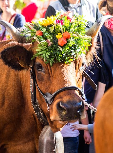 """Vache """"mascotte"""" de l'édition de la Descente des Alpages"""